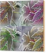 Frosted Maple Leaves In Warm Shades Wood Print