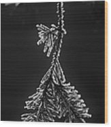 Frosted Pine Branch Wood Print