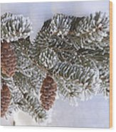 Frosted Pine Tree And Cones 1 Wood Print