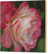 Frosted Rose Wood Print