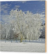 Frosted Trees - Newton Road Park Wood Print