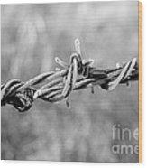 Frosty Barb Wire Wood Print