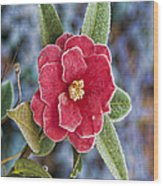 Frosty Camellia - Phone Case Design Wood Print
