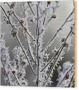 Frosty Field Plant Wood Print