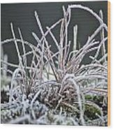 Frosty Grass Wood Print by Karen Grist