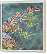 Frosty Leaves Wood Print