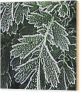 Frosty Leaves Macro Wood Print