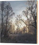 Frosty Morn 3 Wood Print