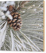 Frosty Norway Pine Wood Print
