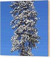 Frosty Pine Wood Print