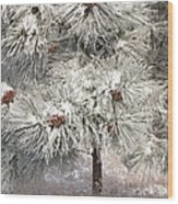 Frosty Pinetree Wood Print