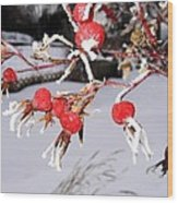 Frosty Rosehips Wood Print