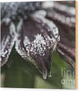 Frosty Rudbeckia Wood Print