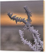 Frosty The Twig  Wood Print