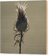 Frosty Thorns Wood Print