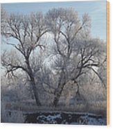 Frosty Trees 4 Wood Print
