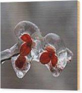 Frozen Bittersweet Pods Wood Print