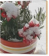 Frozen Christmas Flowers Wood Print