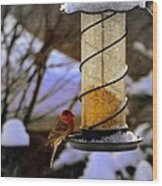 Frozen Feeder And Disappointment Wood Print