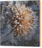 Frozen Fog Wood Print