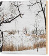Frozen Marshland IIi Wood Print