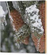 Frozen Pine Tree Wood Print