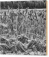 Frozen Reeds Wood Print