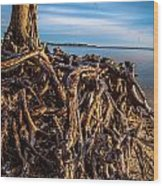Frozen Roots Wood Print
