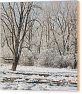 Frozen Swamp Wood Print