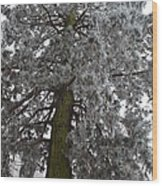 Frozen Tree 2 Wood Print