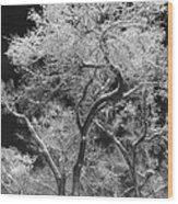 Frozen Trees Wood Print