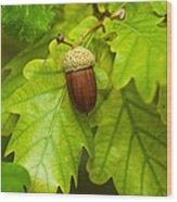 Fruit Of An Oak Tree Ripe In Autumn Wood Print