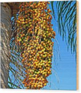 Fruit Of The Queen Palm Wood Print