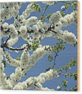 Fruit Tree Blooms Wood Print