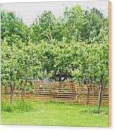 Fruit Trees Wood Print