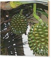 Fruto De Palmera Wood Print