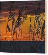 Ft. Myers Sea Oats Wood Print