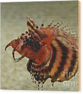 Fu Manchu Lionfish Wood Print