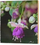 Fuchsia Birthday Card Wood Print