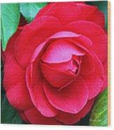 Fuchsia Camellia In Pastel Wood Print