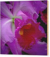 Fuchsia Cattleya Orchid Squared Wood Print by Julie Palencia