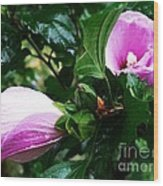 Fuchsia Flowers Laced In Droplets Wood Print