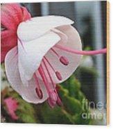 Fuchsia Named Liebelei Wood Print