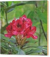 Fuchsia Rhododendron Moore State Park Wood Print