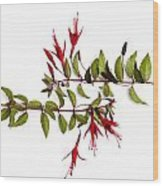 Fuchsia Stems On White Wood Print