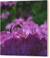 Fuchsia Sweetness Wood Print