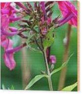 Fucia  Tubular Flowers Wood Print