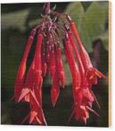 Fucshia Red Flower Wood Print