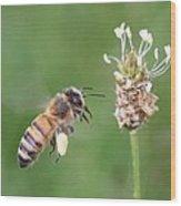 Full Basket Of Plantain Pollen Wood Print