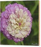 Zinnia In Full Bloom Wood Print